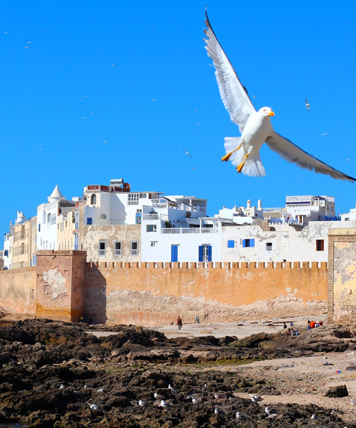 Full Day trip To Essaouira The Ancient Mogador City And Coast